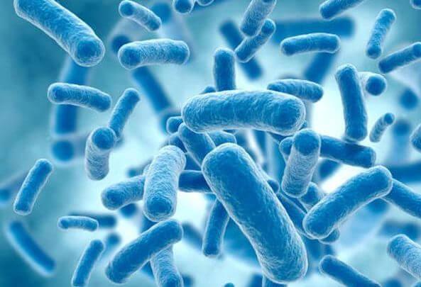 prolificazione batterica caraffa filtrante